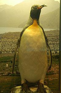 ペンギン 寿命